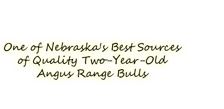 One of Nebraska's Best Sources of Quality Two-Year-Old Angus Range Bulls